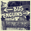 lyricbomb-penguins